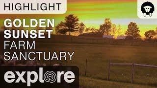 Golden Sunset - Farm Sanctuary - Live Cam Highlight