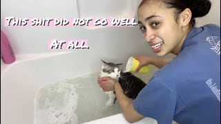 SO I TRIED TO WASH MY CATS..