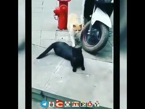 Одилбек охмедов