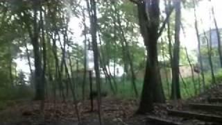 #5 Whisper: Walk Through the Woods