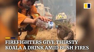 Firefighters give thirsty koala water as bush fires rage across Australia