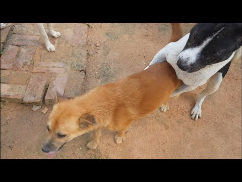 Create Smart  Rural Dogs !! Dog Meeting for the Summer Season in Village.