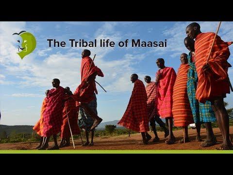 Maasai Mara Village and Tribe Life