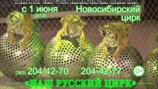 Шоу-программа Мстислава Запашного «Наш Русский цирк»
