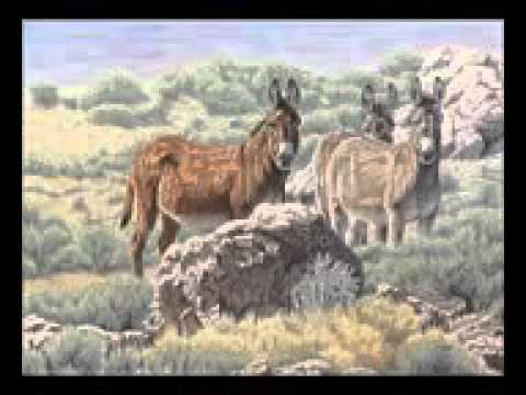 Pastor David Wilkerson Sermons Ministries 2016 - Wild Donkeys