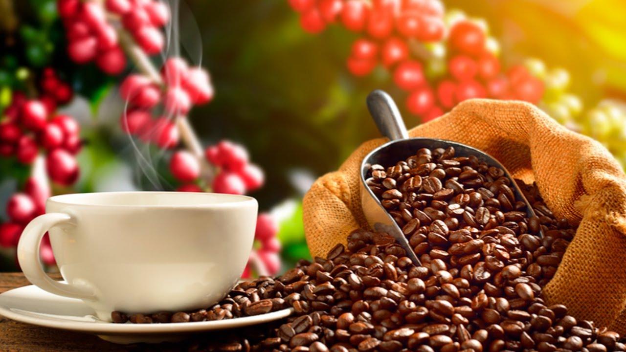Entrevista com Silas Brasileiro - Pres. Conselho Nacional Café - CNC sobre a safra de café 2021