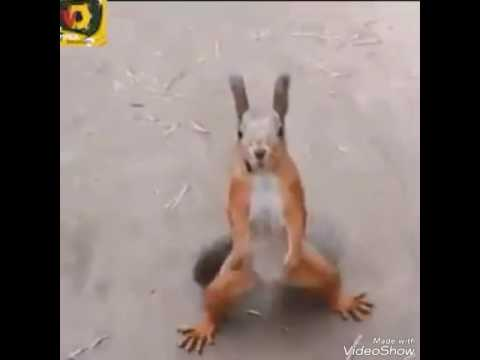 squirrel dance in turuk turuk song