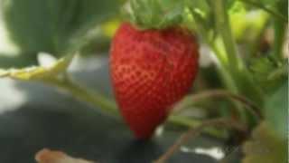 California's Small Farms: Spring Street Farm Project