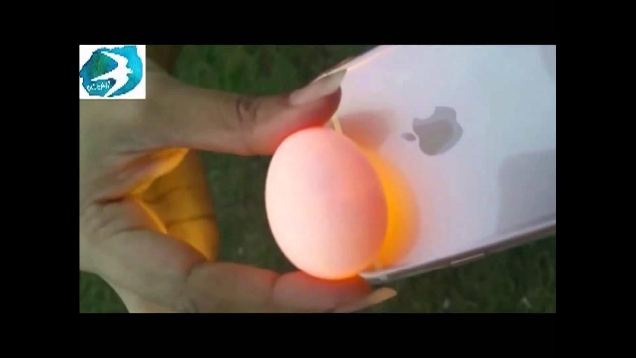 أوشن كيفية معرفة البيض الملقح والغير ملقح تعليمي Youtube