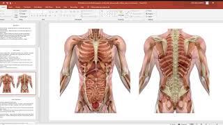 84 Subdivisions of abdominopelvic cavity, body planes, body cavities, serous membranes   PowerPoint