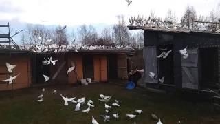Gołębie Tadka: Boże Narodzenie i prezent od Mikołaja :)rozpuszczenie swieżaków