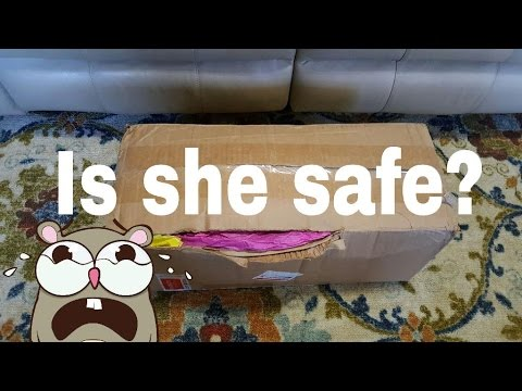 BOX OPENING Of DAMAGED SILICONE BABY | NLOVEWITHREBORNS2011