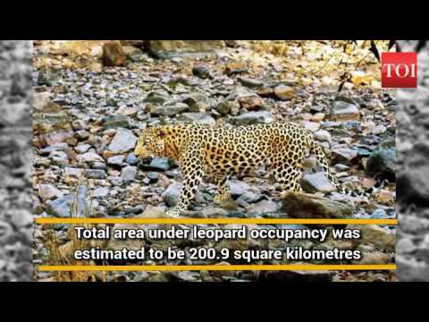 Aravalis in Gurugram, Faridabad core area for leopards