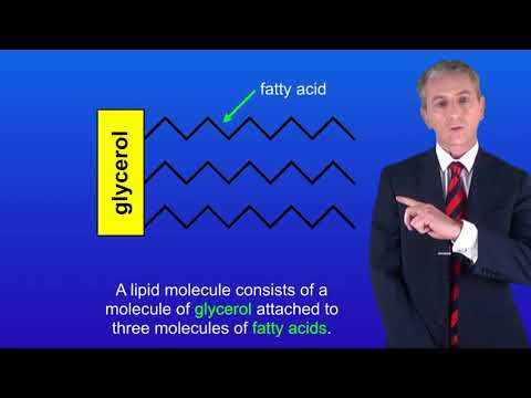 "GCSE Science Revision Biology ""Digestive Enzymes"" from YouTube · Duration:  4 minutes 36 seconds"