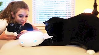 TESTING WEIRD CAT PRODUCTS 🐱