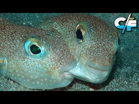 10 Newly Discovered Species of Wildlife