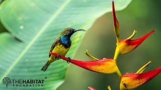 Backyard Birding - Episode 1: The Basics