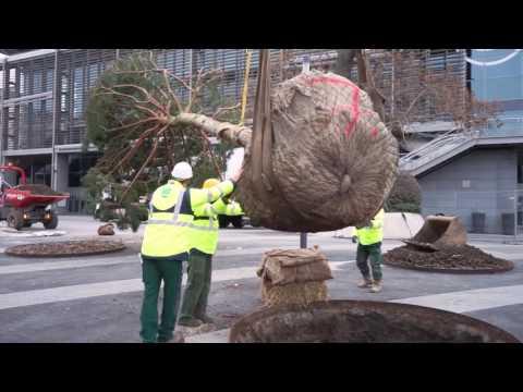 Vallois plante des pins à Paris