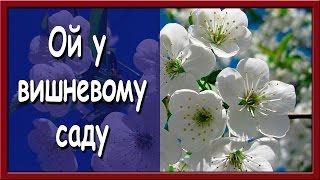 Українська народна пісня. Ой у вишневому саду