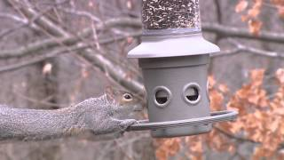 Wild Birds Unlimited - Eliminator™ Squirrel-proof Feeder