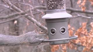 Wild Birds Unlimited - Eliminator™ Squirrel-proof Feeder