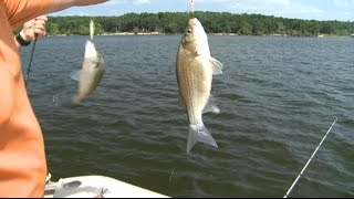 summertime white bass fishing with bendable minnow spoons