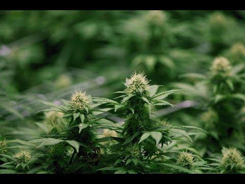 Quebec tables cannabis legislation