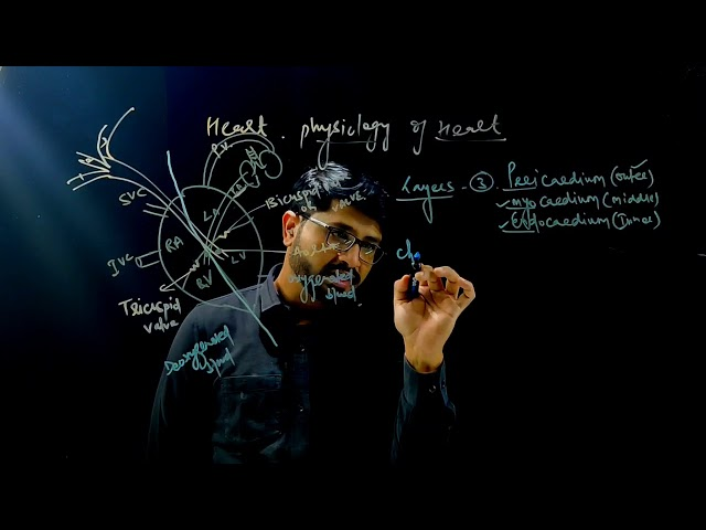 D-PHARMACY PART I  | HAP |  Physiology of Heart