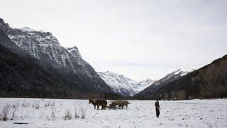 Кадры из фильма Пальмы в снегу