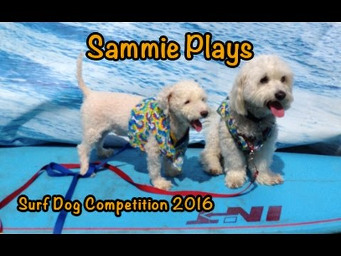 Surf Dog Competition 2016 SP #114