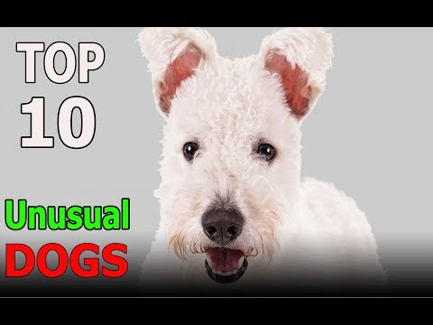 Top 10 Most Unusual Dog Breeds | Top 10 animals