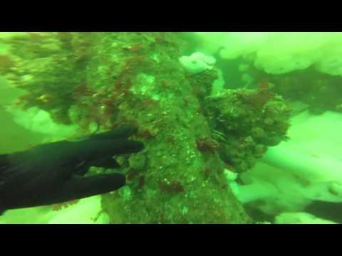 Dive   7 12 15   Point Hudson