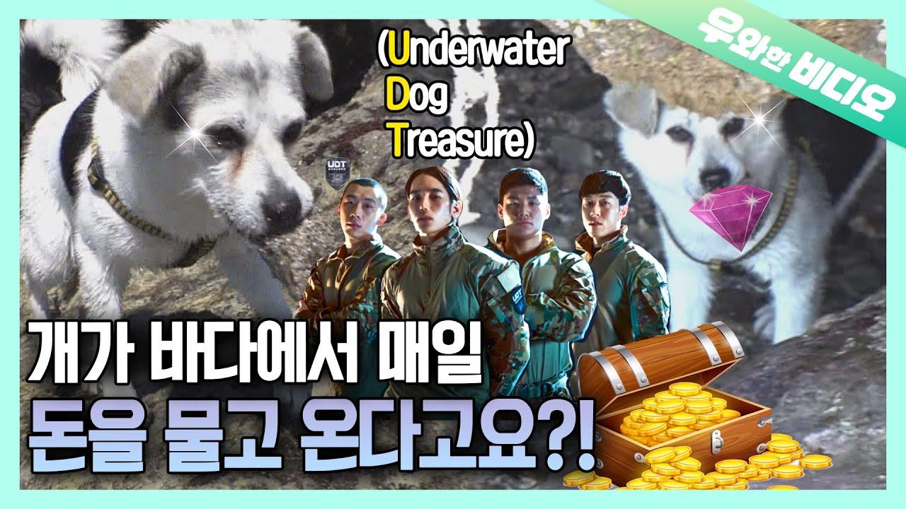 당신의 댕댕이가 매일매일 돈을 물어다 준다면? 갖고 싶다 이 강아지 | What If Your Doggo Brings Money EVERY DAY?💸