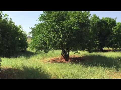 Beeraha Galkacyo Puntland Somalia