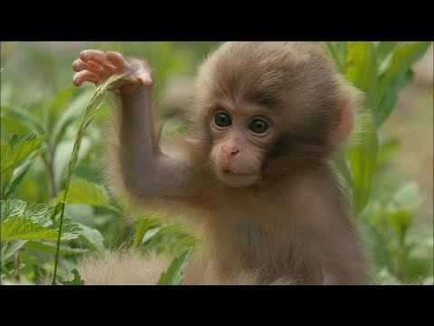 Cute Monkeys Part #2 - Funny Baby Monkeys Will Make You Ẹnoy Compilation 2017 - Pet Cute Animals