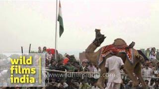 Camel dance show at Pushkar mela, Rajasthan