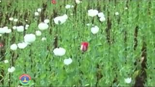 Lao NEWS on LNTV: Laos will celebrate the Day Against Drug Abuse & Illicit Trafficking.23/6/2014