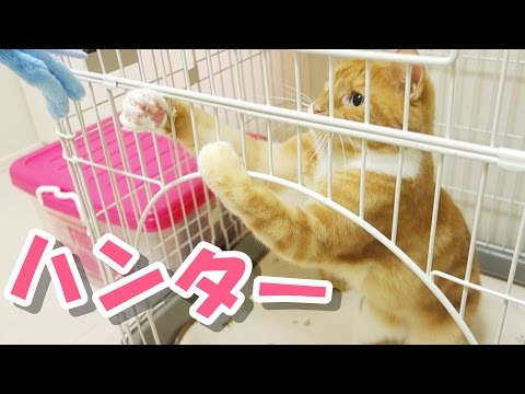 funny cats playing with mouse toy / 【猫 おもしろ】猫ズ、ネズミのおもちゃで遊ぶ