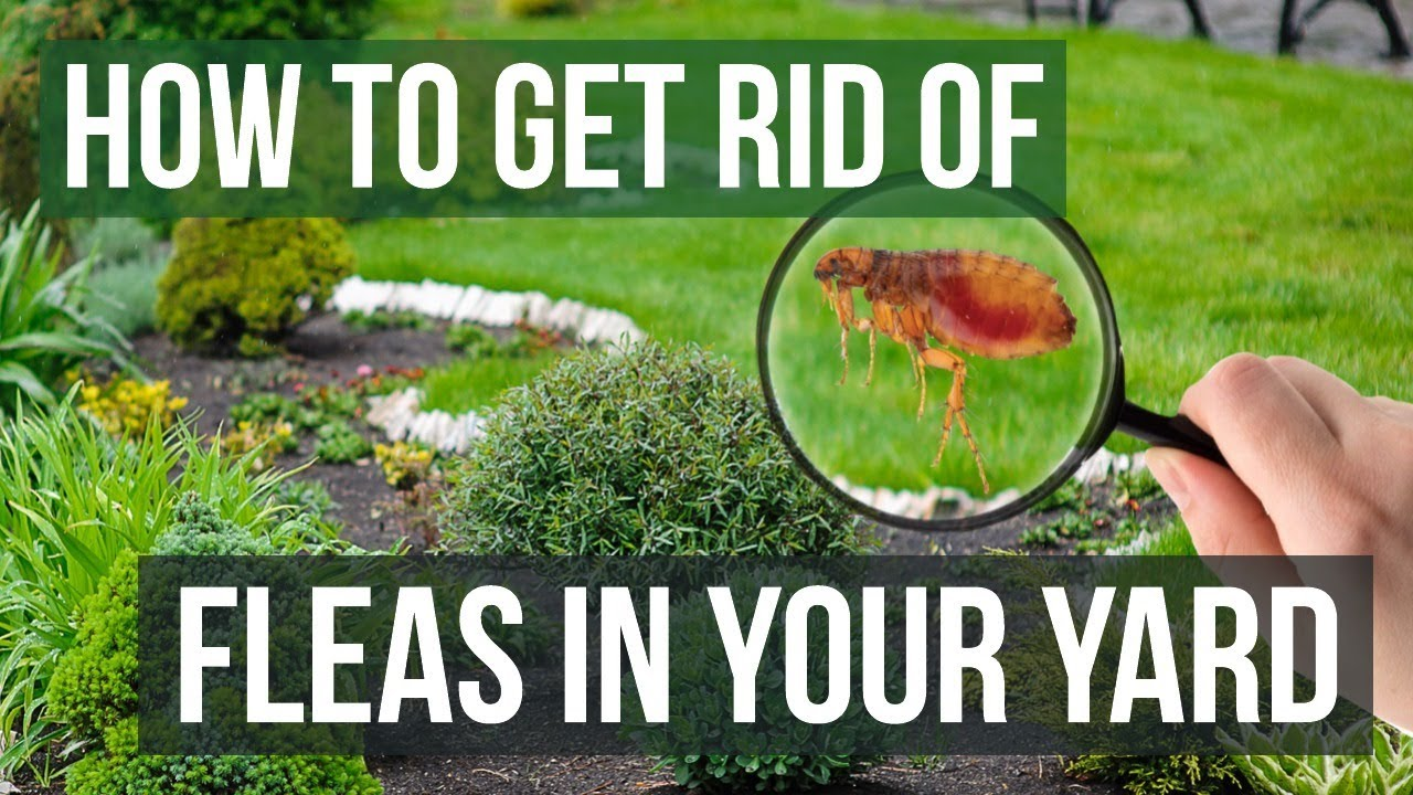 How To Get Rid Of Fleas And Ticks In My Backyard
