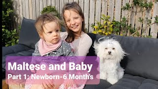 Cute Maltese dog Daisy meets baby / new born to 6 months old