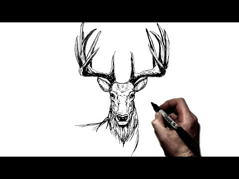 How To Draw A Deer {Stag} | Step By Step