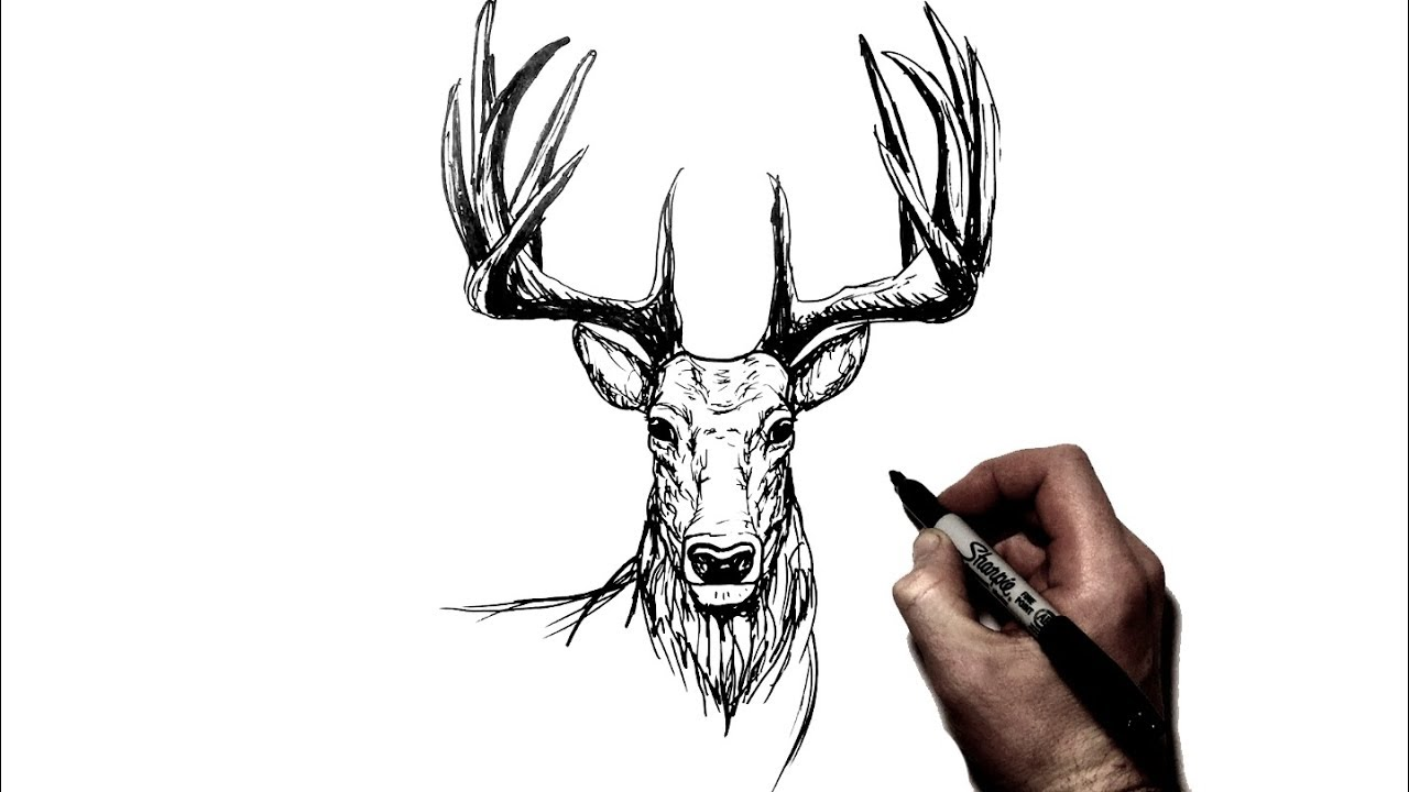 how to draw a deer  stag