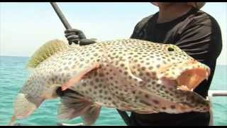 TAAAKA RYBA Hol granika - ryba z Oceanu Indyjskiego
