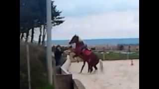 Chute cheval Petit poney qui ce coince l'antérieur..