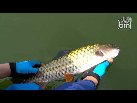 Catch Big Monster Amazing Fish at a beautiful lake in China