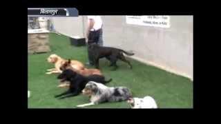 Dog Squade Railway