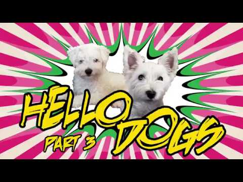 Hello Dogs - part 3 - Autumn park | Childrens show. Funny dogs and animals. No violence.