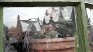 Screaming Baby Mandrake Root at Harry Potter World