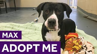 Adopt Max | Dogs | The Mayhew