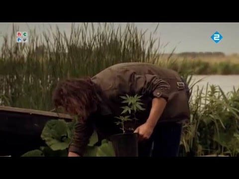 Cannabis and his Prohibition in the Netherlands Documentation (English Subs)